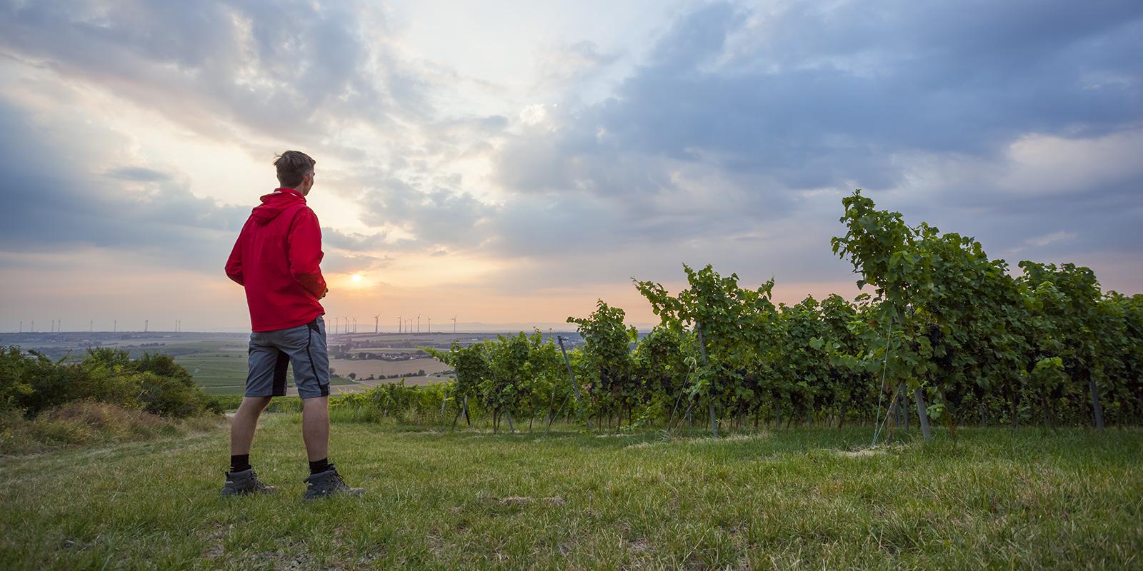 Weinkultur